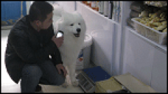 Νεαρό Σκυλάκι Εξασκεί Περίφημα Τις Φωνητικές Του Ικανότητες